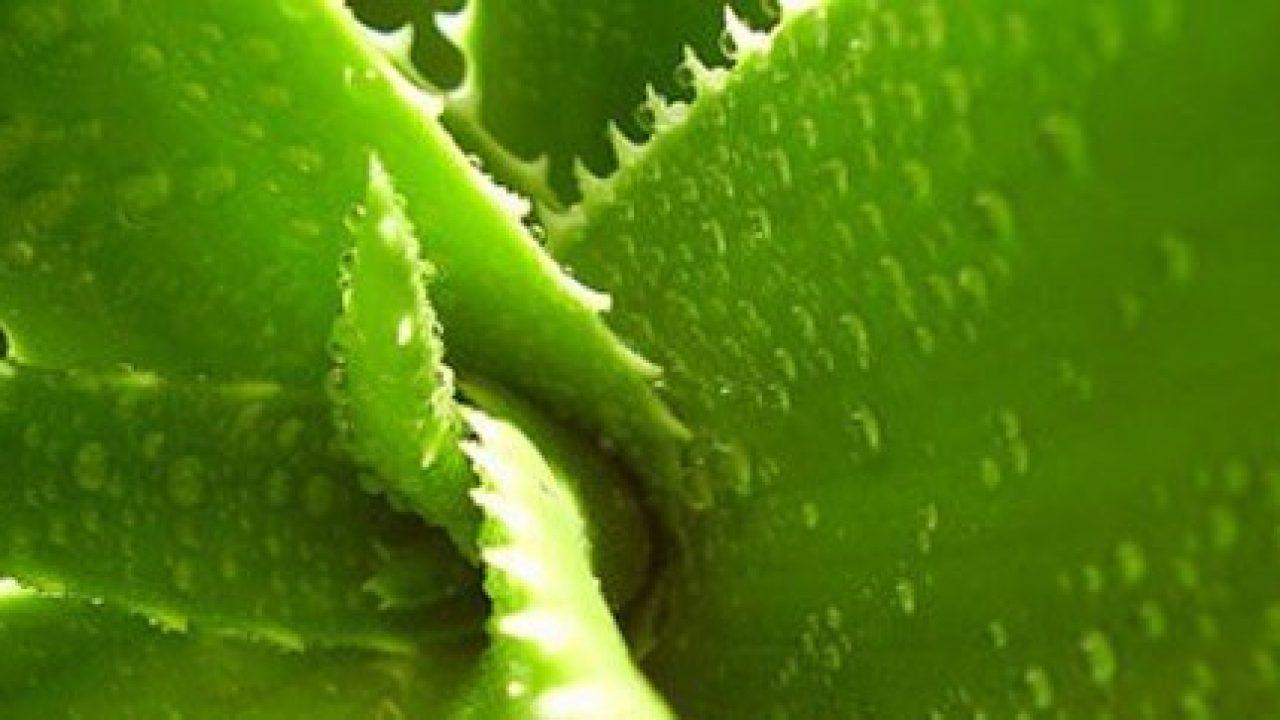 Cresce il consumo di erbe medicinali, ma crescono anche i rischi