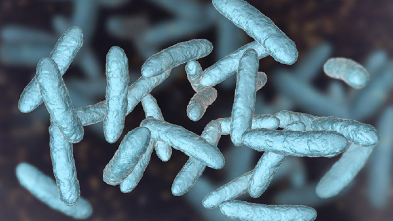 Nell'eccesso di peso coinvolti anche i batteri dell'intestino